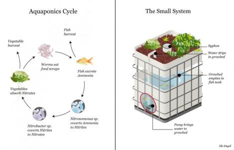 Aquaponics: vissen kweken en groenten verbouwentegelijk
